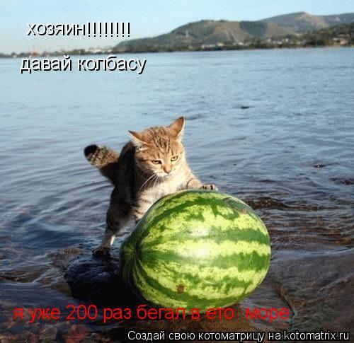 Котоматрица: хозяин !!!!!!!! давай колбасу я уже 200 раз бегал в ето  море