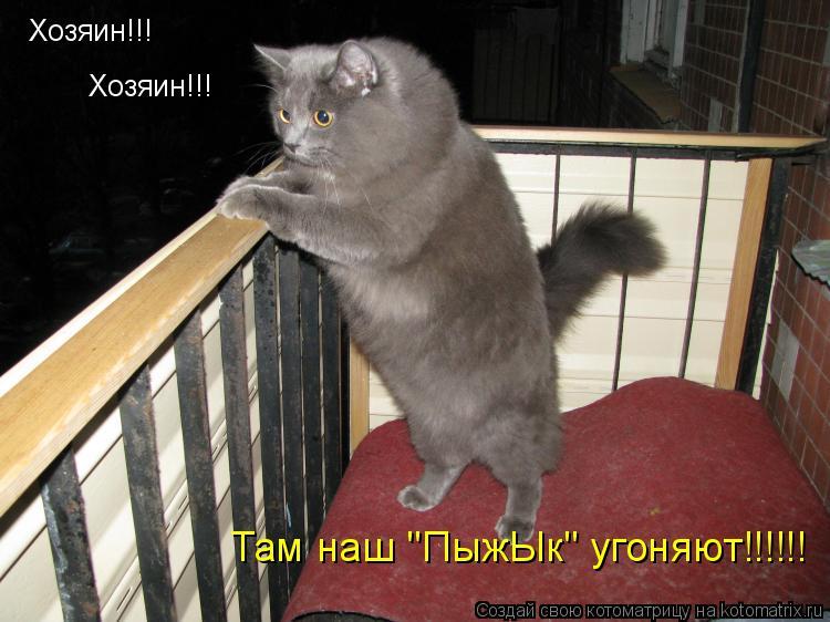 "Котоматрица: Хозяин!!! Хозяин!!! Там наш ""ПыжЫк"" угоняют!!!!!!"