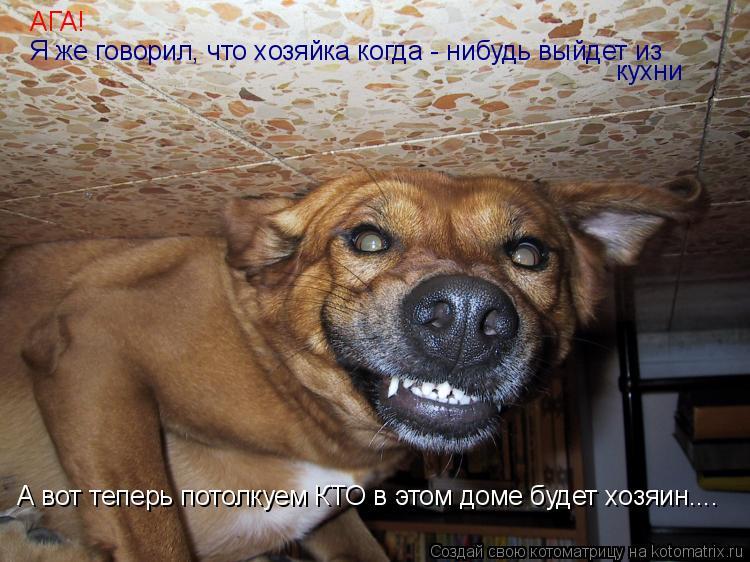 Котоматрица: АГА! Я же говорил, что хозяйка когда - нибудь выйдет из кухни А вот теперь потолкуем КТО в этом доме будет хозяин....