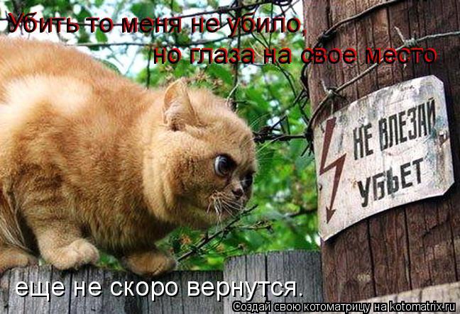 Котоматрица: Убить то меня не убило, Убить то меня не убило, но глаза на свое место но глаза на свое место еще не скоро вернутся…