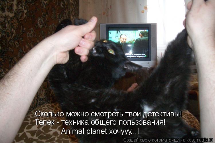 Котоматрица: Сколько можно смотреть твои детективы! Телек - техника общего пользования! Animal planet хочууу...!