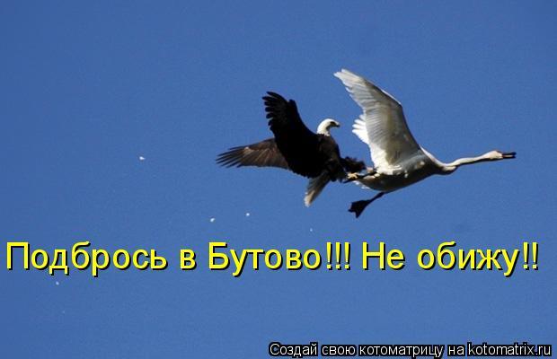 Котоматрица: Подбрось в Бутово!!! Не обижу!!