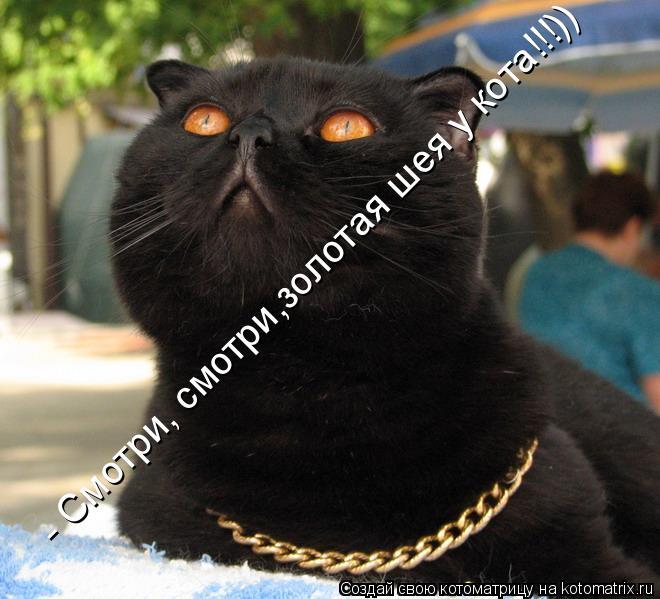 Котоматрица: - Смотри, смотри,золотая шея у кота!!!))