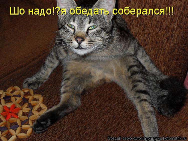 Котоматрица: Шо надо!?я обедать соберался!!!
