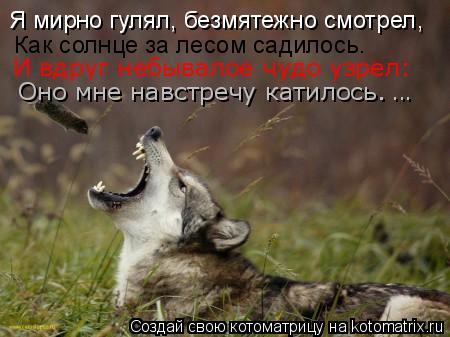 Котоматрица: Я мирно гулял, безмятежно смотрел,   Как солнце за лесом садилось.  И вдруг небывалое чудо узрел:  Оно мне навстречу катилось.   ...