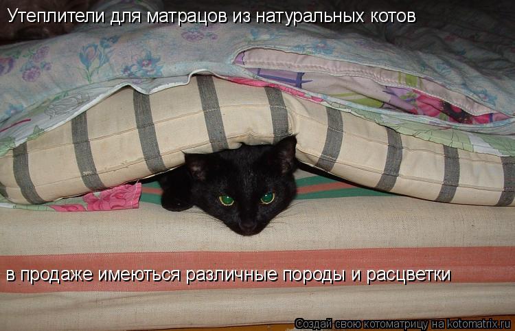 Котоматрица: Утеплители для матрацов из натуральных котов в продаже имеються различные породы и расцветки