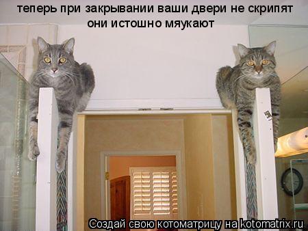 Котоматрица: теперь при закрывании ваши двери не скрипят они истошно мяукают