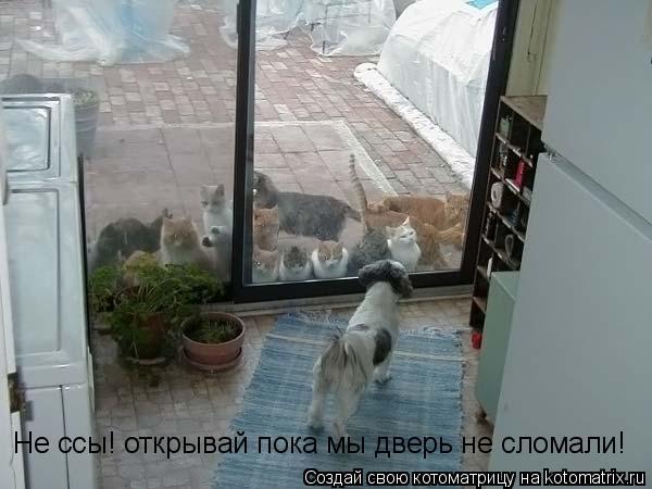 Котоматрица: Не ссы! открывай пока мы дверь не сломали!