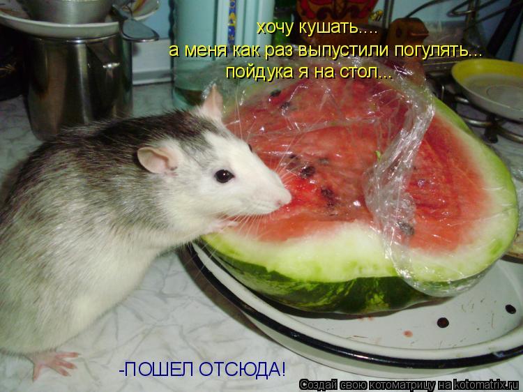 Котоматрица: хочу кушать.... а меня как раз выпустили погулять... пойдука я на стол... -ПОШЕЛ ОТСЮДА!