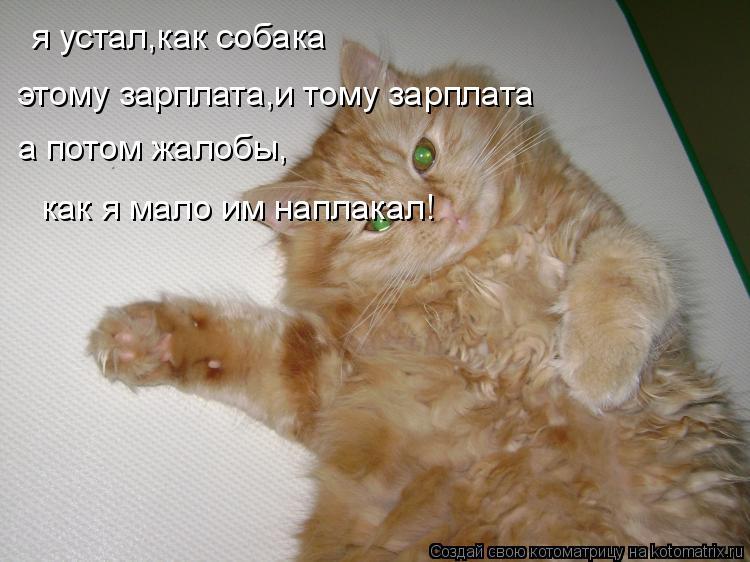 Котоматрица: я устал,как собака этому зарплата,и тому зарплата а потом жалобы, как я мало им наплакал!