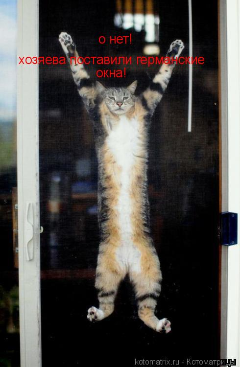 Котоматрица: о нет! хозяева поставили германские  окна!