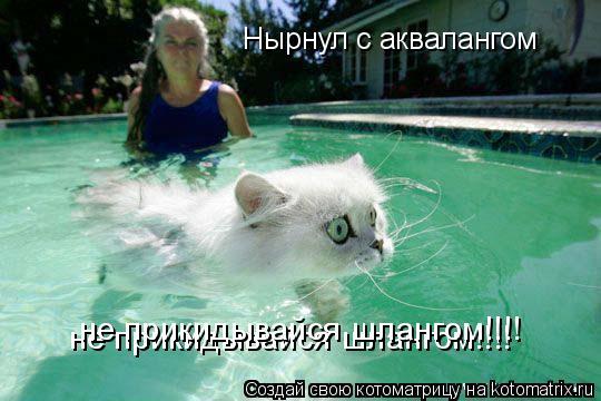 Котоматрица: Нырнул с аквалангом - не прикидывайся шлангом Нырнул с аквалангом  не прикидывайся шлангом!!!! не прикидывайся шлангом!!!!