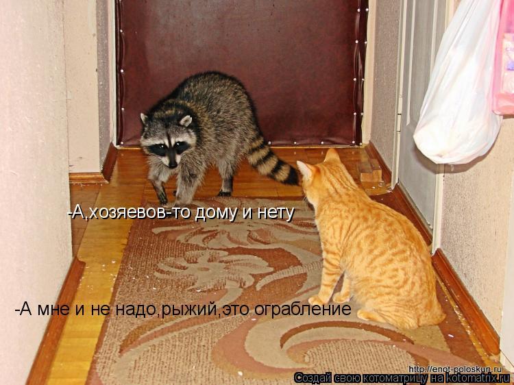 Котоматрица: -А,хозяевов-то дому и нету -А мне и не надо,рыжий,это ограбление