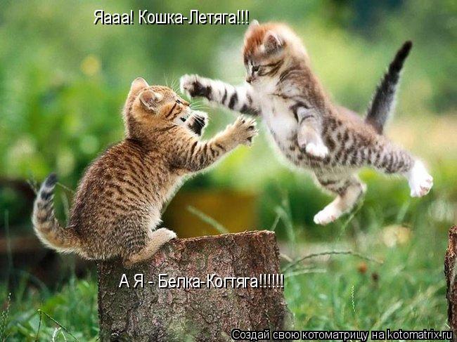 Котоматрица: Яааа! Кошка-Летяга!!! А Я - Белка-Когтяга!!!!!!