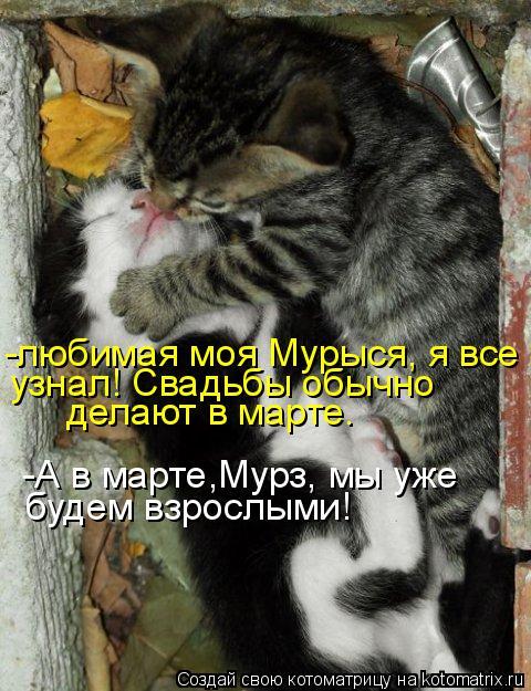 Котоматрица: -любимая моя Мурыся, я все узнал! Свадьбы обычно делают в марте. -А в марте,Мурз, мы уже  будем взрослыми!