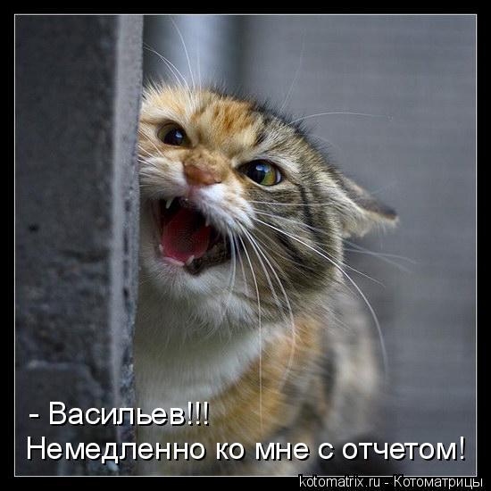 Котоматрица: Немедленно ко мне с отчетом! - Васильев!!!