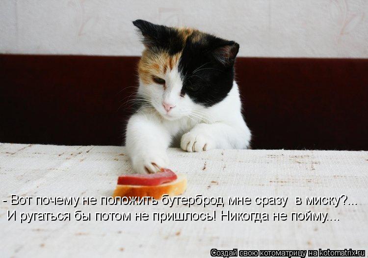 Котоматрица: - Вот почему не положить бутерброд мне сразу  в миску?... И ругаться бы потом не пришлось! Никогда не пойму....