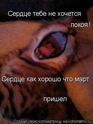 Котоматрица: Сердце тебе не хочется  покоя Сердце как хорошо что март  пришел !