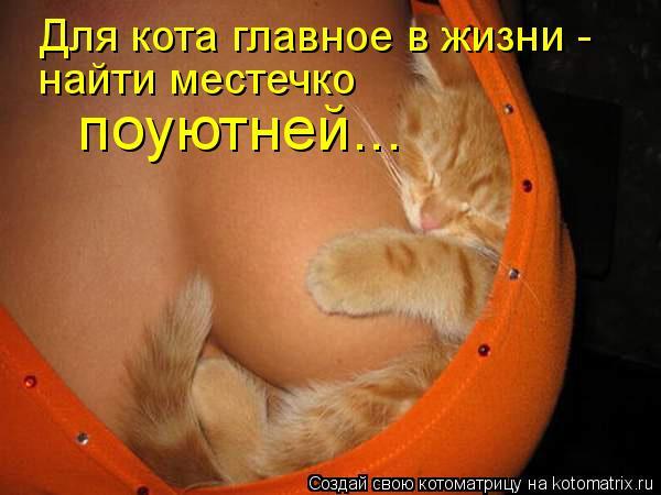 Котоматрица: Для кота главное в жизни - найти местечко  поуютней...