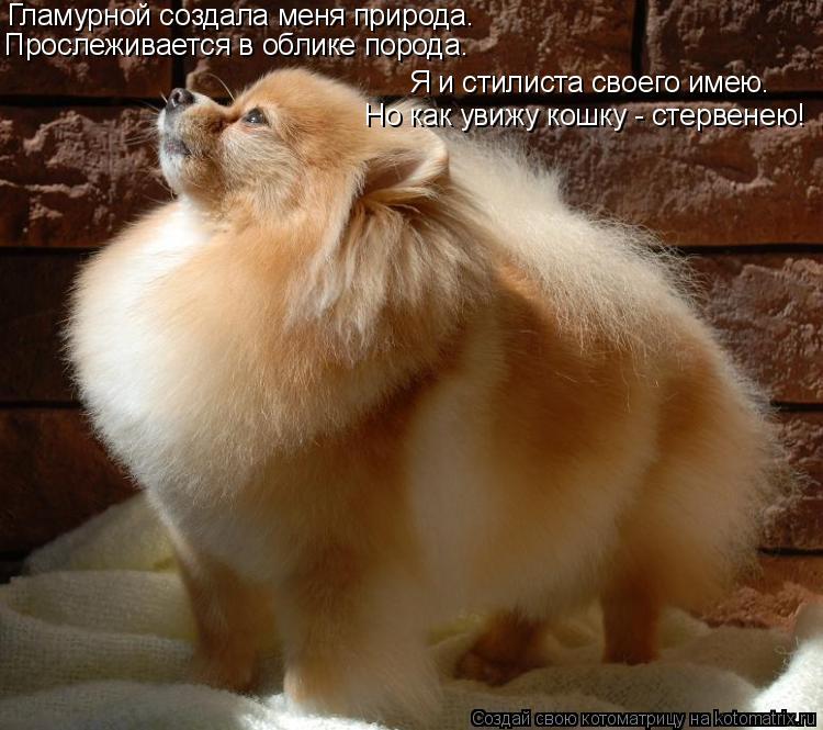 Котоматрица: Гламурной создала меня природа.  Прослеживается в облике порода.  Я и стилиста своего имею.  Но как увижу кошку - стервенею!