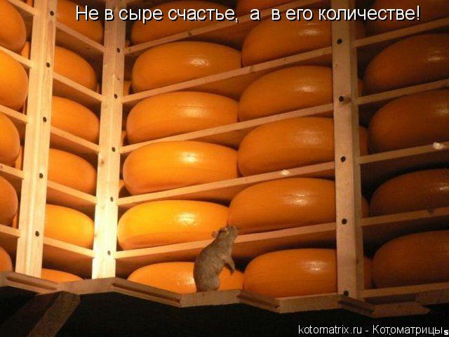 Котоматрица: Не в сыре счастье,  а  в его количестве!