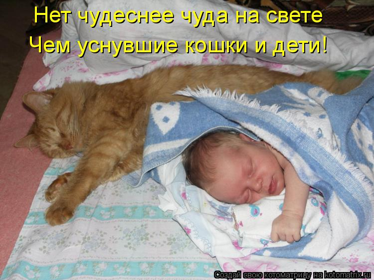 Котоматрица: Нет чудеснее чуда на свете Чем уснувшие кошки и дети!