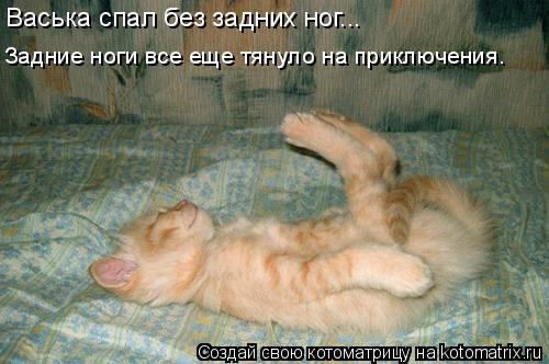 Котоматрица: Васька спал без задних ног... Задние ноги все еще тянуло на приключения.
