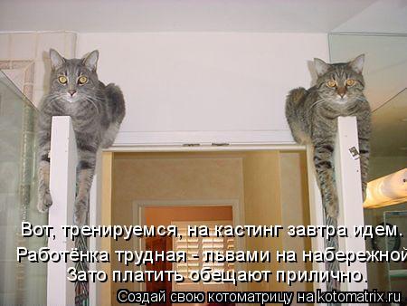 Котоматрица: Вот, тренируемся, на кастинг завтра идем. Работёнка трудная - львами на набережной. Зато платить обещают прилично.