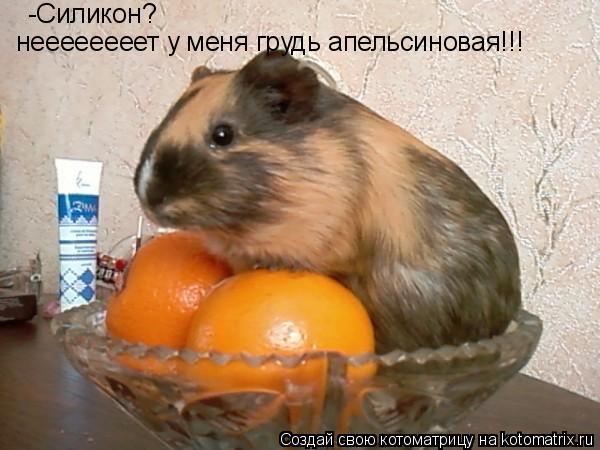 Котоматрица: неееееееет у меня грудь апельсиновая!!! -Силикон?