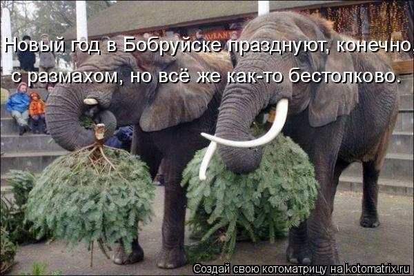 Котоматрица: Новый год в Бобруйске празднуют, конечно,  с размахом, но всё же как-то бестолково.