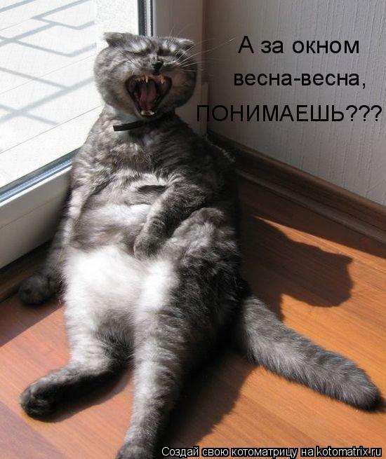 Котоматрица: А за окном  весна-весна,  ПОНИМАЕШЬ???