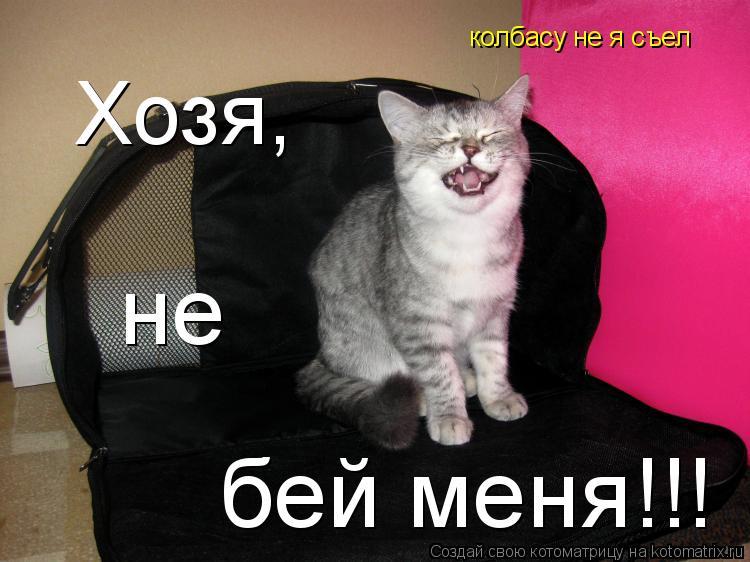 Котоматрица: Хозя, не бей меня!!! колбасу не я съел