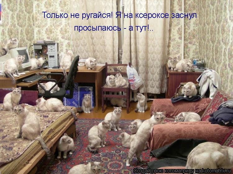 Котоматрица: Только не ругайся! Я на ксероксе заснул просыпаюсь - а тут!..