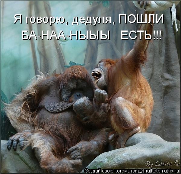 Котоматрица: Я говорю, дедуля, ПОШЛИ  БА-НАА-НЫЫЫ   ЕСТЬ!!!