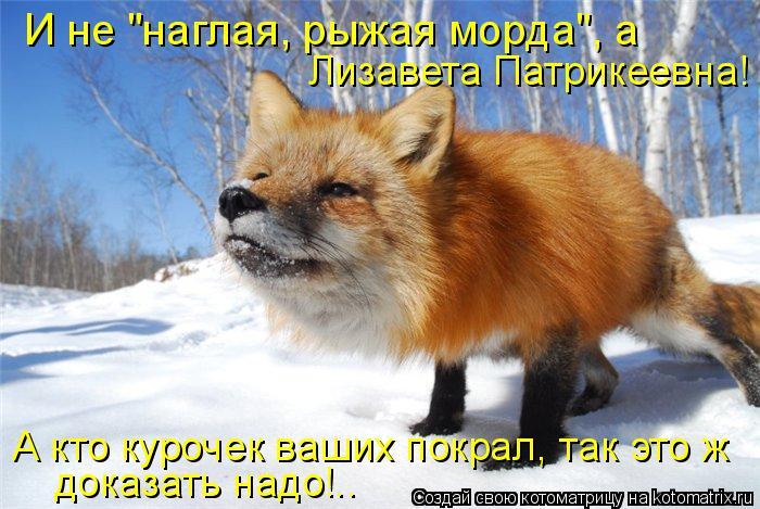 """Котоматрица: И не """"наглая, рыжая морда"""", а  Лизавета Патрикеевна! А кто курочек ваших покрал, так это ж доказать надо!.."""
