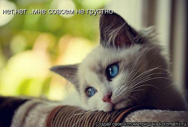 Котоматрица: нет,нет...мне совсем не грустно