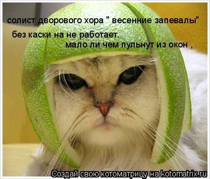 """Котоматрица: солист дворового хора """" весенние запевалы"""" без каски на не работает. мало ли чем пульнут из окон ,"""
