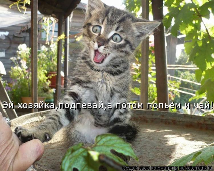 Котоматрица: Эй хозяйка,подпевай,а потом попьём и чай!!!!