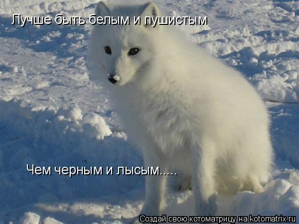 Котоматрица: Лучше быть белым и пушистым Чем черным и лысым.....