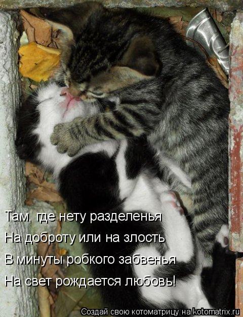 Котоматрица: Там, где нету разделенья На доброту или на злость В минуты робкого забвенья На свет рождается любовь!
