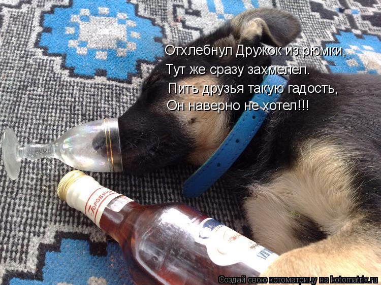 Котоматрица: Отхлебнул Дружок из рюмки, Тут же сразу захмелел. Пить друзья такую гадость, Он наверно не хотел!!!