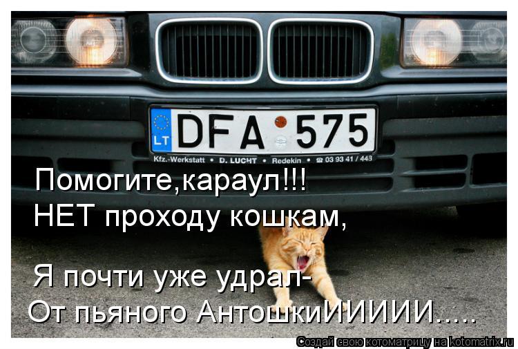 Котоматрица: Помогите,караул!!! НЕТ проходу кошкам, Я почти уже удрал- От пьяного АнтошкиИИИИИ.....