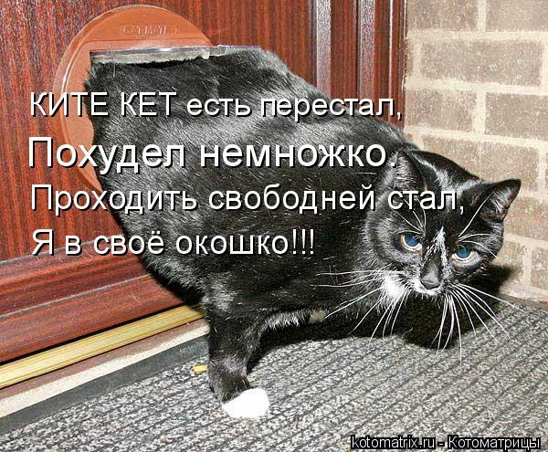 Котоматрица: КИТЕ КЕТ есть перестал, Похудел немножко. Проходить свободней стал, Я в своё окошко!!!