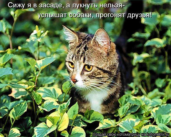Котоматрица: Сижу я в засаде, а пукнуть нельзя- услышат собаки, прогонят друзья!