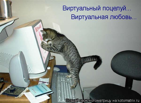 Котоматрица: Виртуальный поцелуй... Виртуальная любовь...