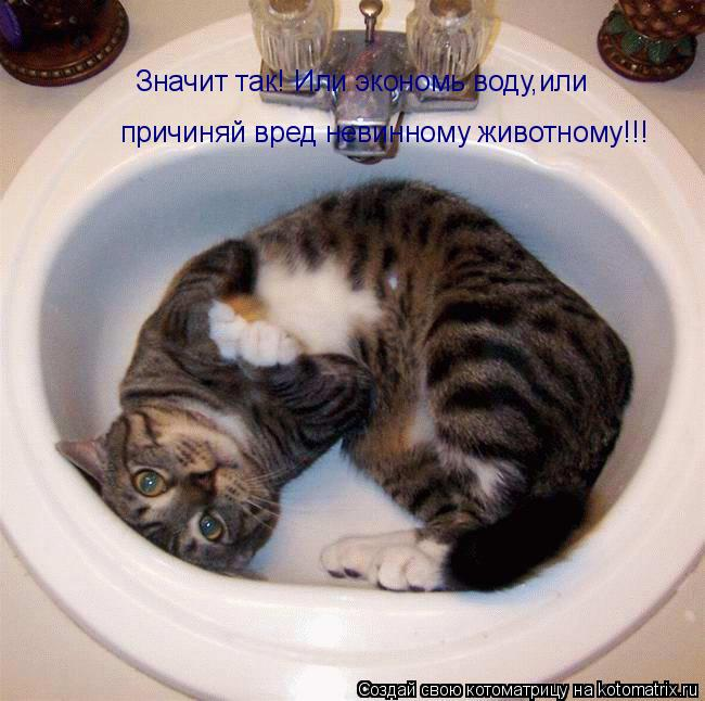 Котоматрица: Значит так! Или экономь воду,или причиняй вред невинному животному!!!