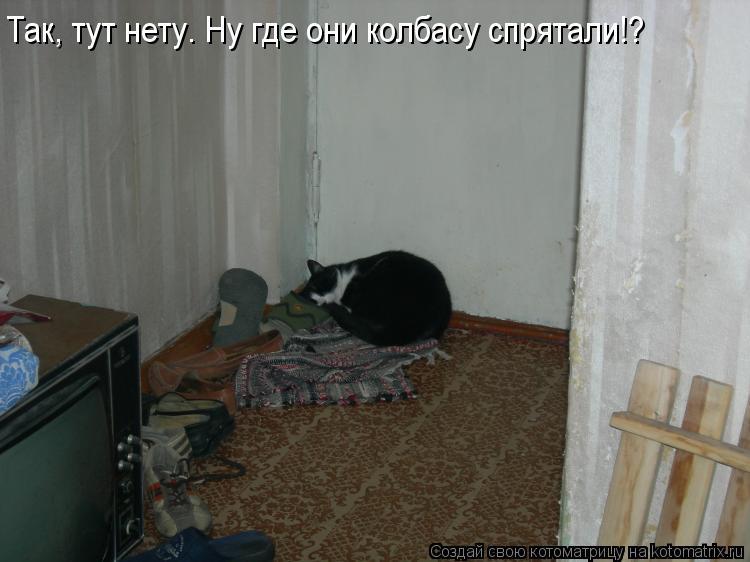 Котоматрица: Так, тут нету. Ну где они колбасу спрятали!?