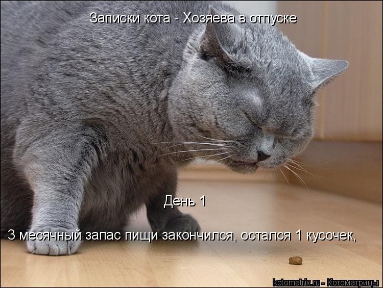 Котоматрица: Записки кота - Хозяева в отпуске 3 месячный запас пищи закончился, остался 1 кусочек, День 1