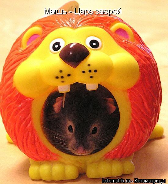 Котоматрица: Мышь - Царь зверей