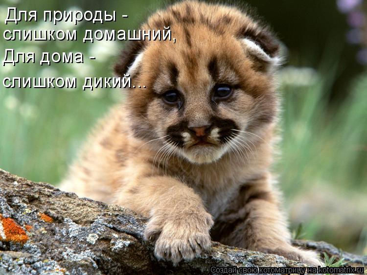 Котоматрица: Для природы -  слишком домашний, Для дома -  слишком дикий...